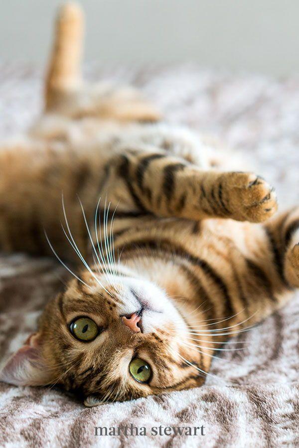 Pin On Pet Love