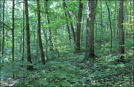 G9495 Enhancing White-tailed Deer Habitats on Your Property ...