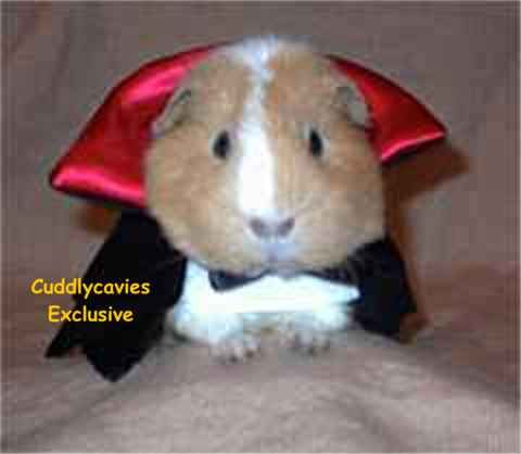 Count Cavy costume