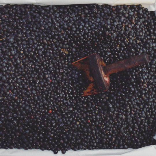 Agraz / Blueberry / unreife Traube oder Blaubeere #learnspanish #learningspanish #deutschlernen #lernendeutsch #learningenglish #learnenglish #español #fruits #vegetables #natur