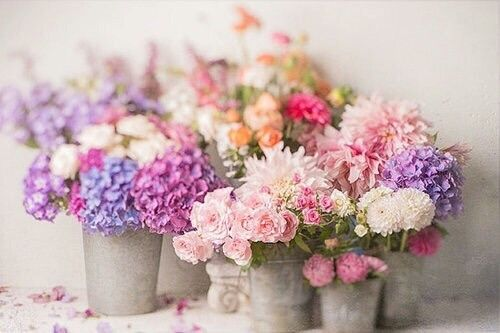 #spring #primavera #flowers #flores #rosas #beautiful #falandodemodaa #nature #natureza