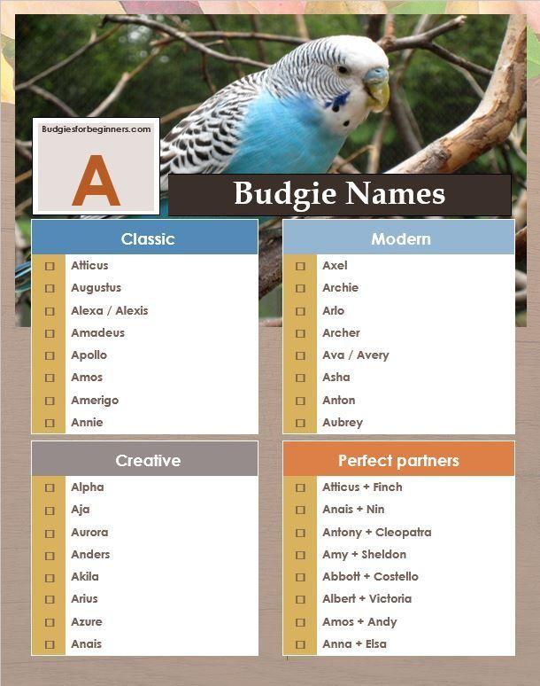 Unique Pet Bird Names Beginning With A B C D Budgies For Beginners Unique Pet Bird Names Beginning With A B C D In 2020 Unique Animals Pet Bird Budgies