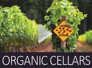 Home page Sustainable Cellars http://www.veno.com.au/sustainable-organic-biodynamic-natural.html
