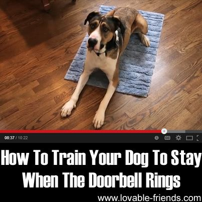 How To Train Your Dog To Stay When The Doorbell Rings ►► http://www.lovable-friends.com/train-dog-stay-doorbell-rings/?i=p