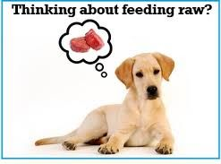 Raw feeding is probably the most controversial form of feeding dogs today. I hear from many vets on a daily basis that raw is extremely dangerous, unbalanced, not nutritious. On the other side....