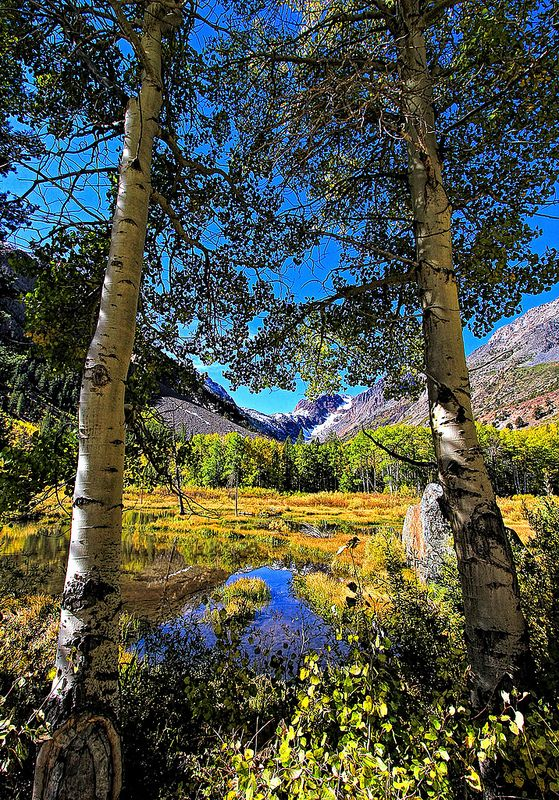 ~~Fall in Lundy Canyon | Sierra Nevadas, California by Dave Toussaint (www.photographersnature.com)~~