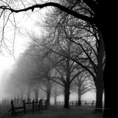 Smoke Between The Black And White Trees: Blackandwhite, Nature Pictures, Black White Photography, White Mornings, Black And White, Art Prints, Trees, Mornings Dew, Harold Silverman