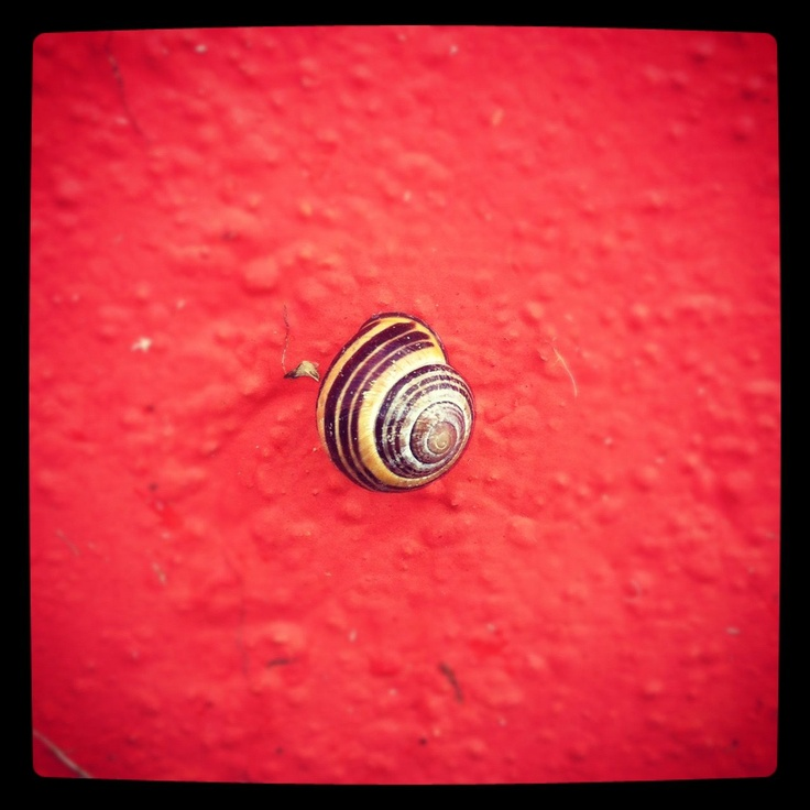 #snail #red #wall: Snails, Life, Snail Red, Red Walls