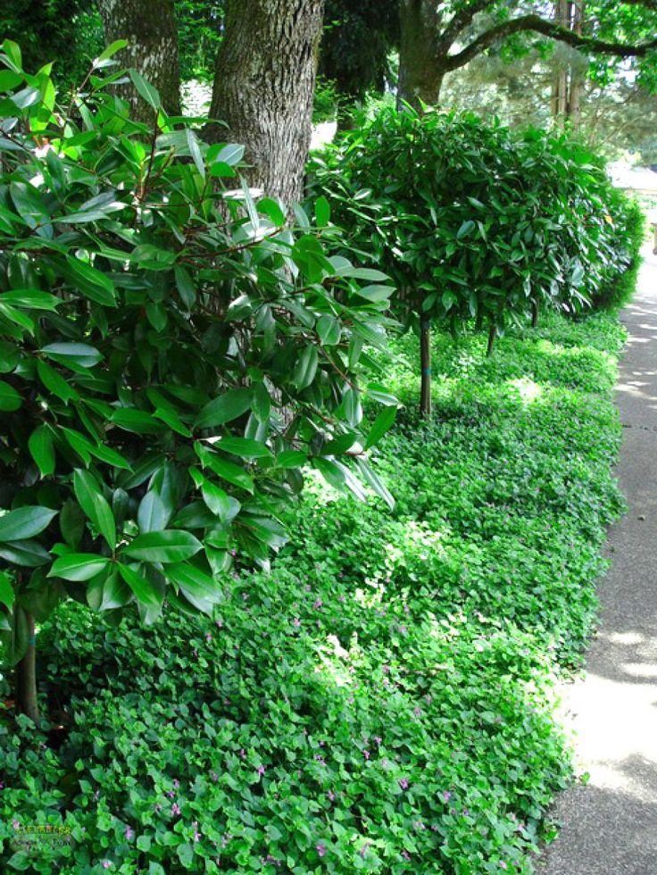 How to choose groundcovers and plants to use as lawn for Choosing plants for landscaping