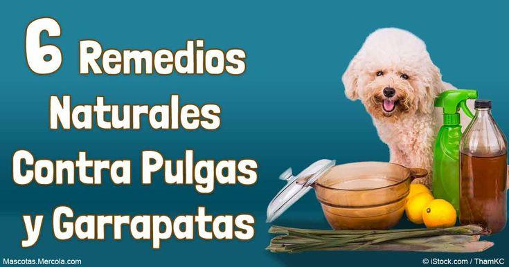 M s de 25 ideas incre bles sobre ahuyentar gatos en - Remedios caseros para las pulgas en casa ...