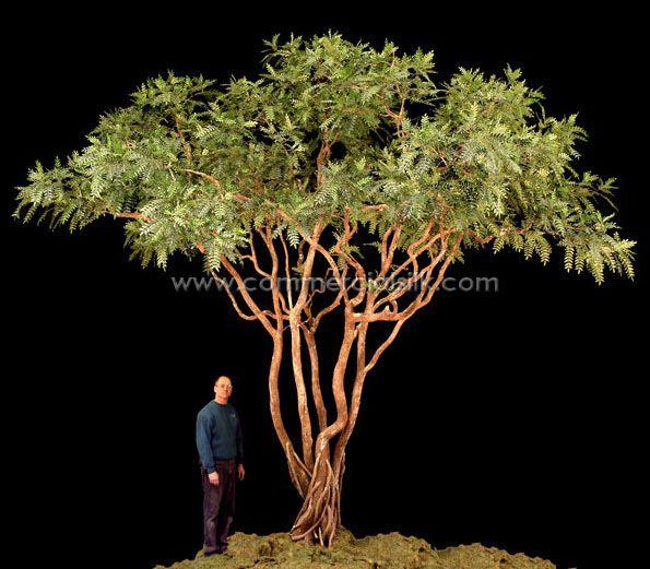 Acacia Tree My Decorative Advise Ideas Landscaping Shrubs