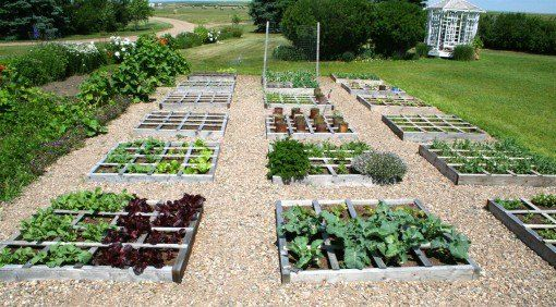 using palets for raised beds