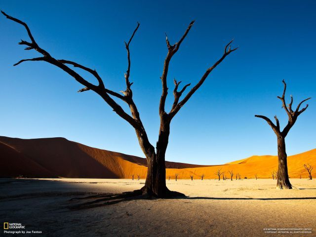Love these trees from National Geographic