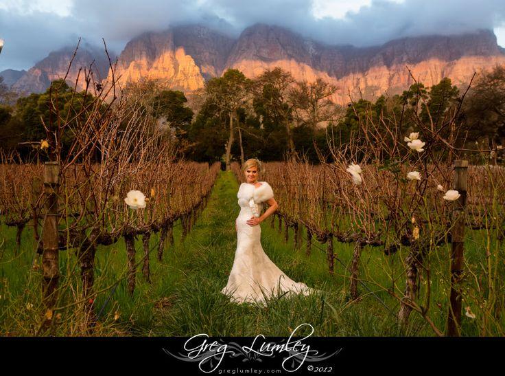 Gorgeous bridal portrait with winter vineyard backdrop Stellenbosch South Africa