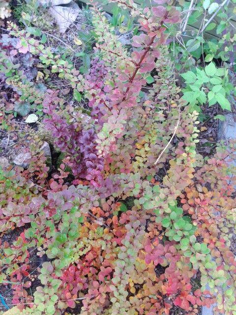 So colourful plant
