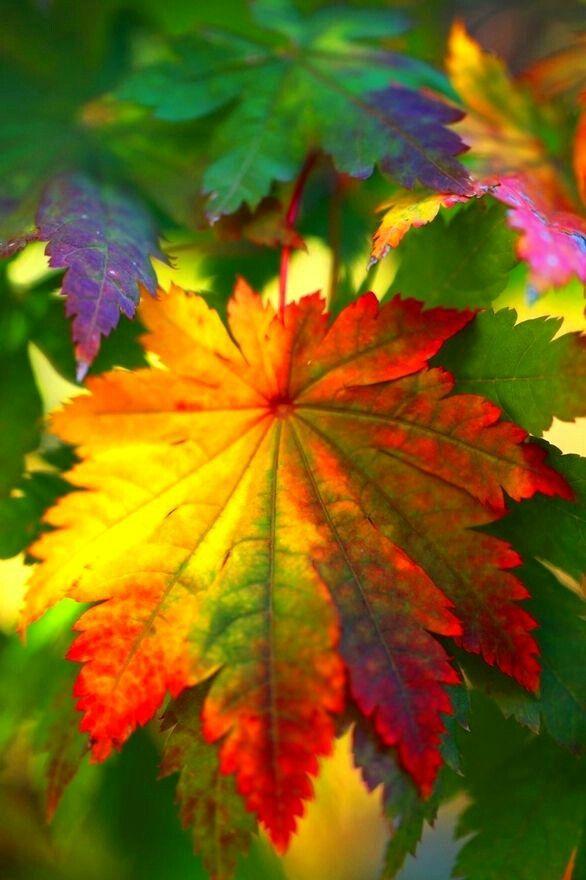 Autumn's brilliant color --