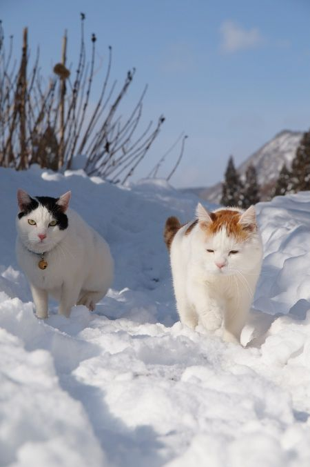 the cats... and that weather! how amazing!