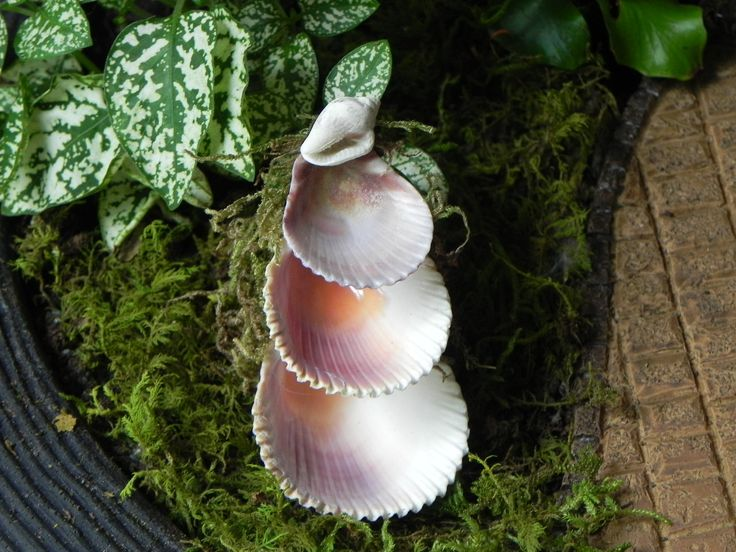 Miniature Fairy Garden Fountain 3 tier shells by TheLittleHedgerow