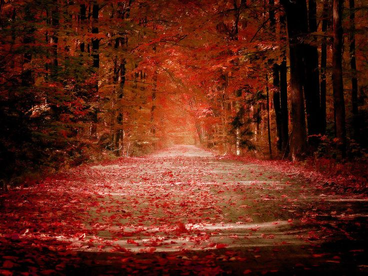 autumn: Autumn Scene, Autumn Photos, Fall Leaves, Walks, Autumn Leaves, Color, Autumn Fall, Red Leaves, Shades Of Red