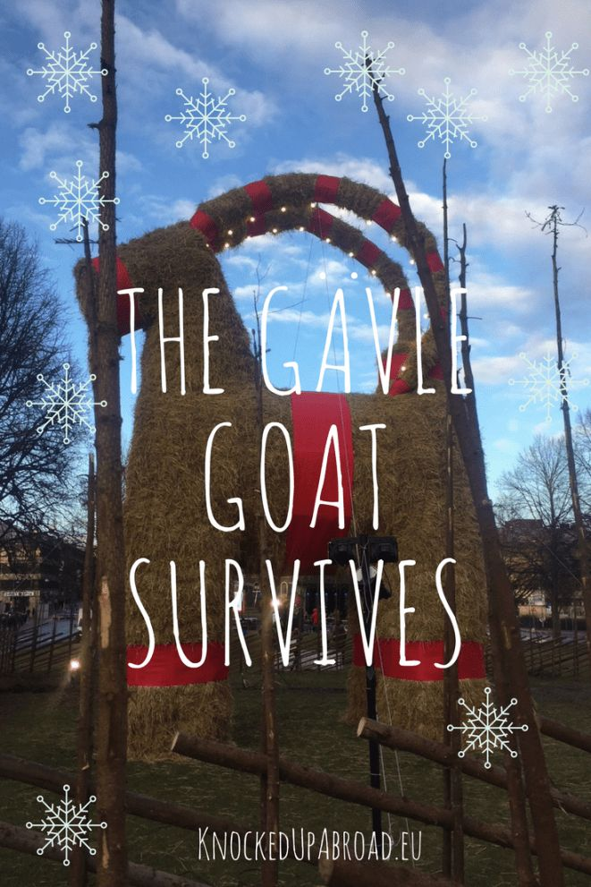 The Gävle Goat Survives - Knocked Up Abroad