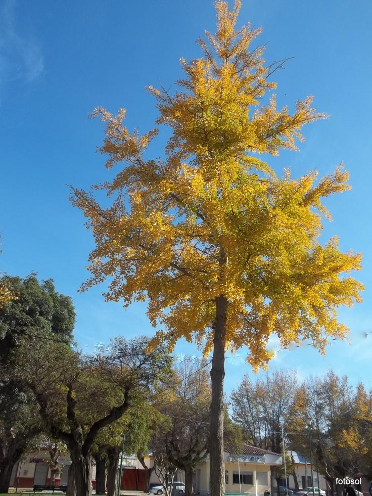 M s de 25 ideas incre bles sobre arboles caducifolios en for Arboles que no pierden sus hojas en otono
