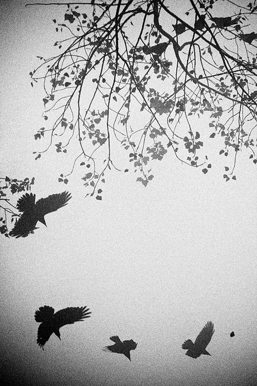 Black and White   Tumblr