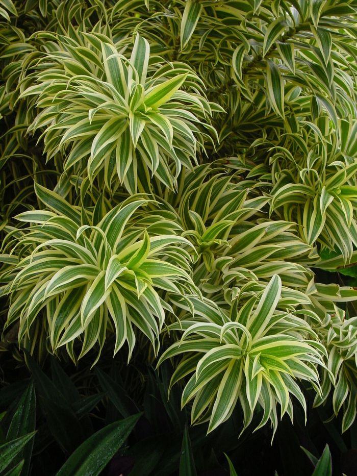 Plantas de interior resistentes varias opciones tropical - Plantas resistentes de interior ...