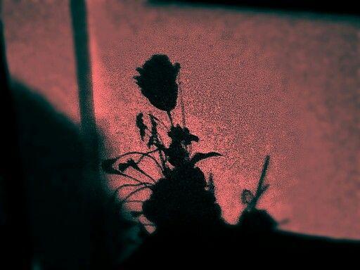 Fiore in ombra!!