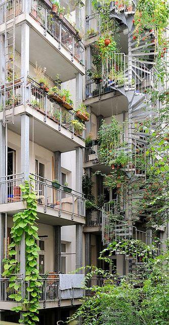 6133 Grüner Hinterhof in Hamburg Eimsbüttel - Balkons und Feuertreppe mit wuchernden Grünpflanzen bewachsen.
