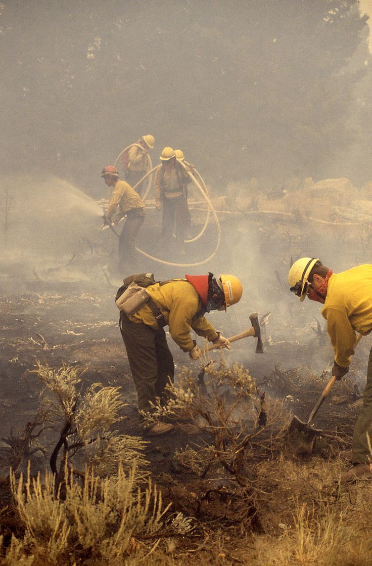 yellowstone fire | Yellowstone fires of 1988 Picture Gallery