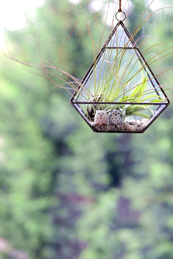 Air Plant Terrarium in a Geometric Stained Glass Vase - Air Plant, Succulent, Marimo Terrariums. Dinosaur Planters, Botanical Jewellery.