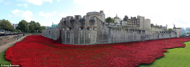 Panoramic: The sea of red is a stark reminder of those soldiers who lost their lives tryin...