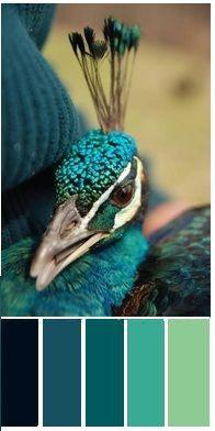 color palette - Peacock Color
