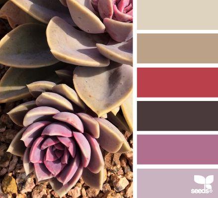 Succulent Tones - http://design-seeds.com/index.php/home/entry/succulent-tones11