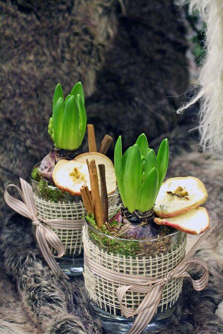 Hyacinter och kanel. Små söta dekorationer att ha en och en eller att placera flera i en grupp.