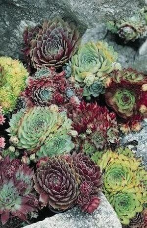 Drought-Tolerant Succulent Container Garden Plans - Photo