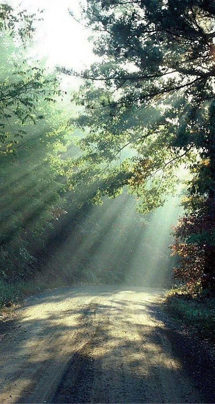 Nature-Forest-Sunlight-Trees-Road-iphone-5s-parallax-wallpaper-ilikewallpaper_com.jpg (744×1392)