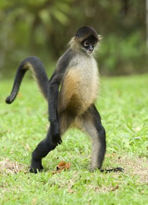 monkeys_photo.jpg 300 ×415 pixels