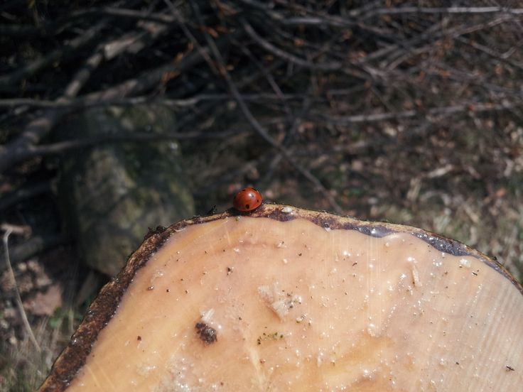 Ladybird on stump by Tomáš Zúbrik on 500px