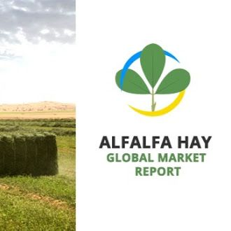 Recent Global Alfalfa Hay Market industry research report says Alfalfa Hay Market is expected to reach 35.5 Billion USD in 2022.