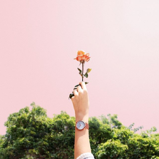 Be my rose - In partnership with @harperandbrooks // The minimalists at #harperandbrooks are doing a giveaway where three winners will be announced next Friday! That is the Rose Gold 316L. Just give them a follow and this watch could be yours! #earthday