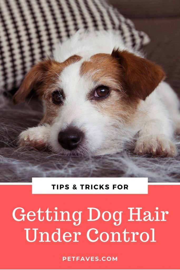 Pin On Best Cleaning Tips For Pets