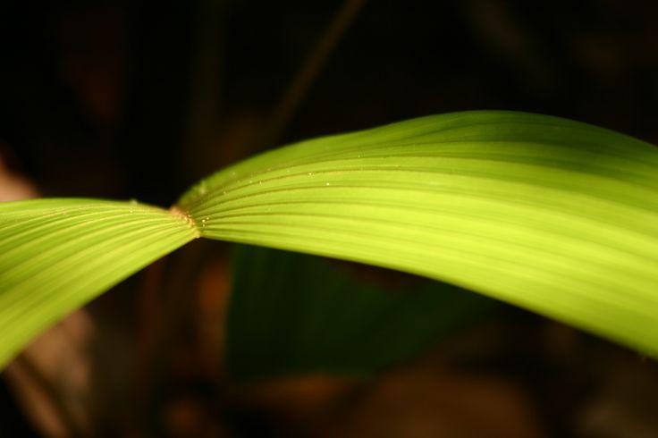 In the Amazon Jungle!