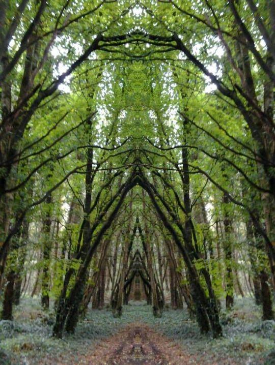 Belleek Castle Woods, Ireland