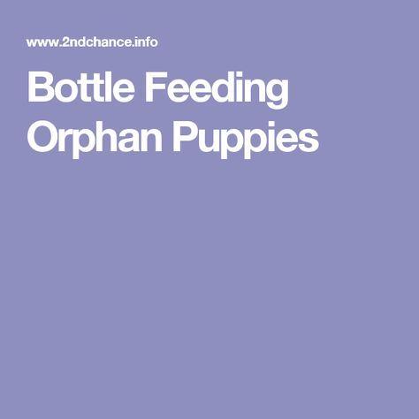 Bottle Feeding Orphan Puppies