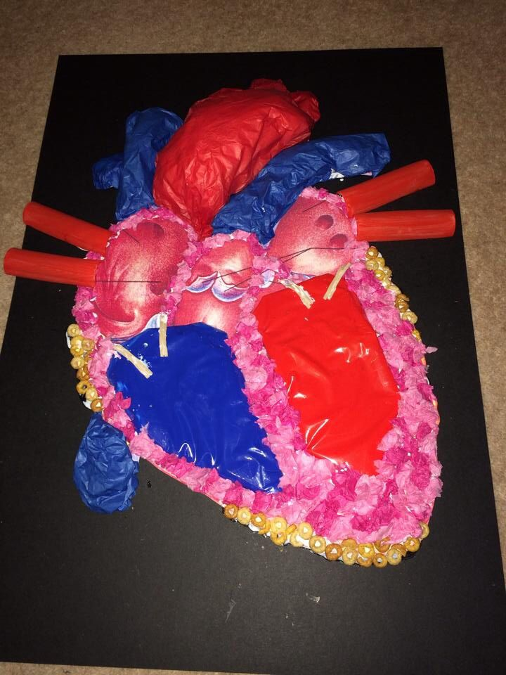 3d Diagram Of The Human Heart Which I Am Using For A Ks2 Classroom Display  Left Ventricle And