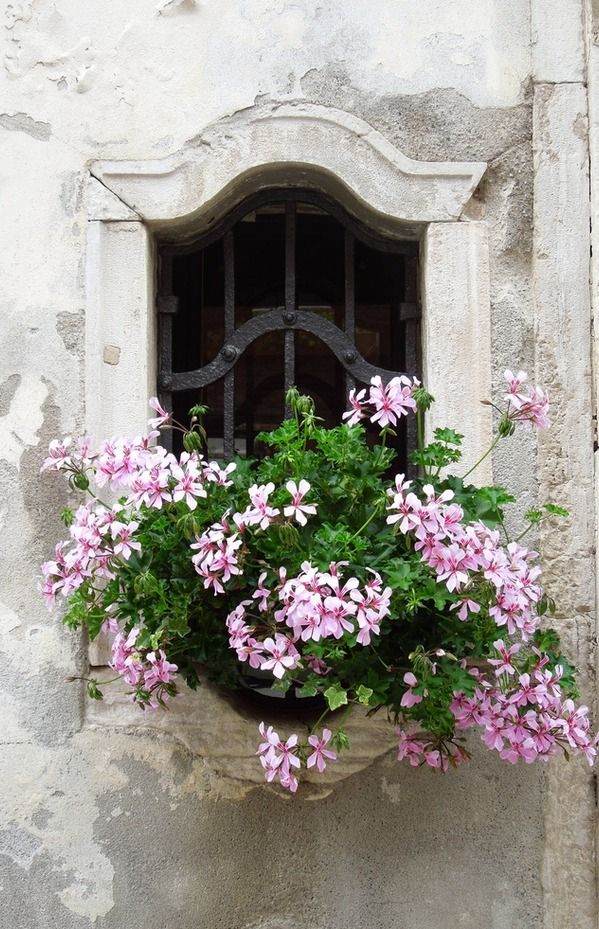 Sweet Window Box