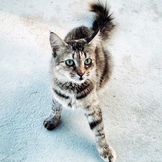 Ayia Thekla, Cyprus #Cyprus #cat #green4city #коты Кипра