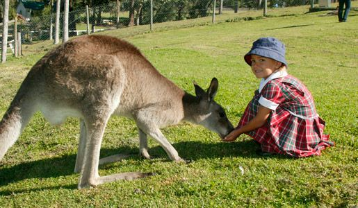 Day 2- Paradise Country Farm, Brisbane You can feed the friendly kangaroos, visit Koala Village where you can have your photo taken with a cuddly Koala. Contact us : 021-4223838 visit oue website: www.avia.travel