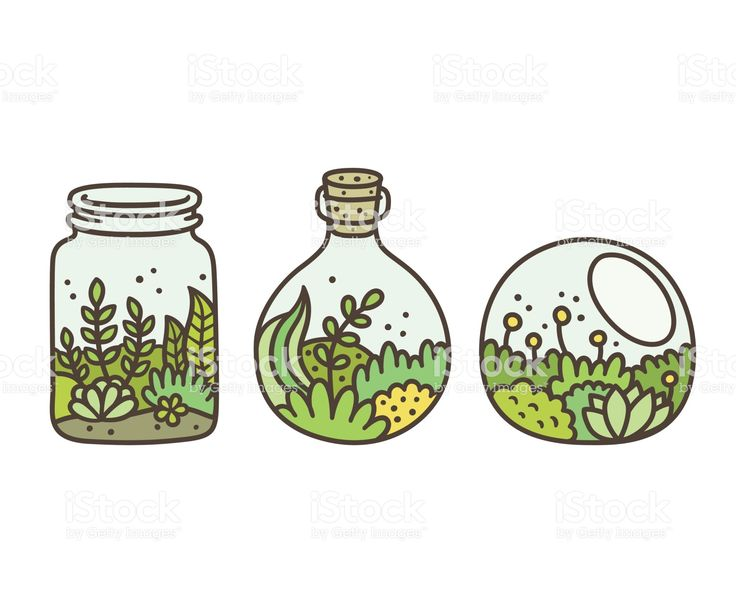 Plants in terrariums set. Moss, succulents and flowers in glass jars….